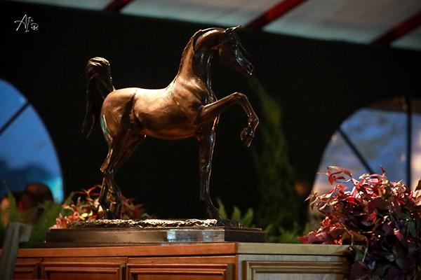 Exposição Nacional do Cavalo Árabe é tema do próximo programa da raça
