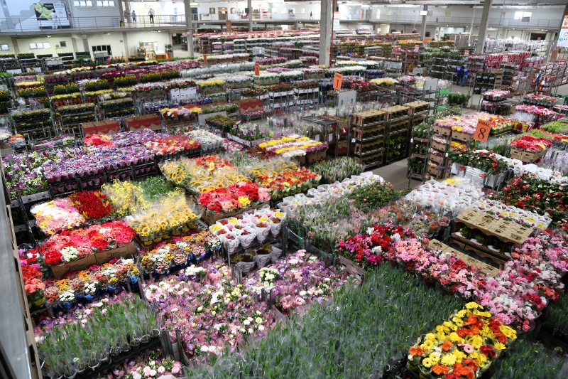 Produtores de Holambra aderem ao Tratoraço. São Paulo representa 70% da cadeia produtiva de flores