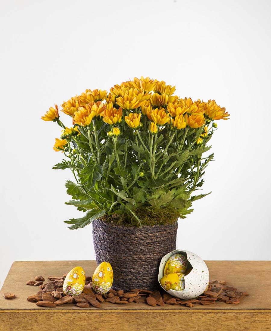 Produtores sugerem que visitas sejam substituídas por flores nesta Páscoa