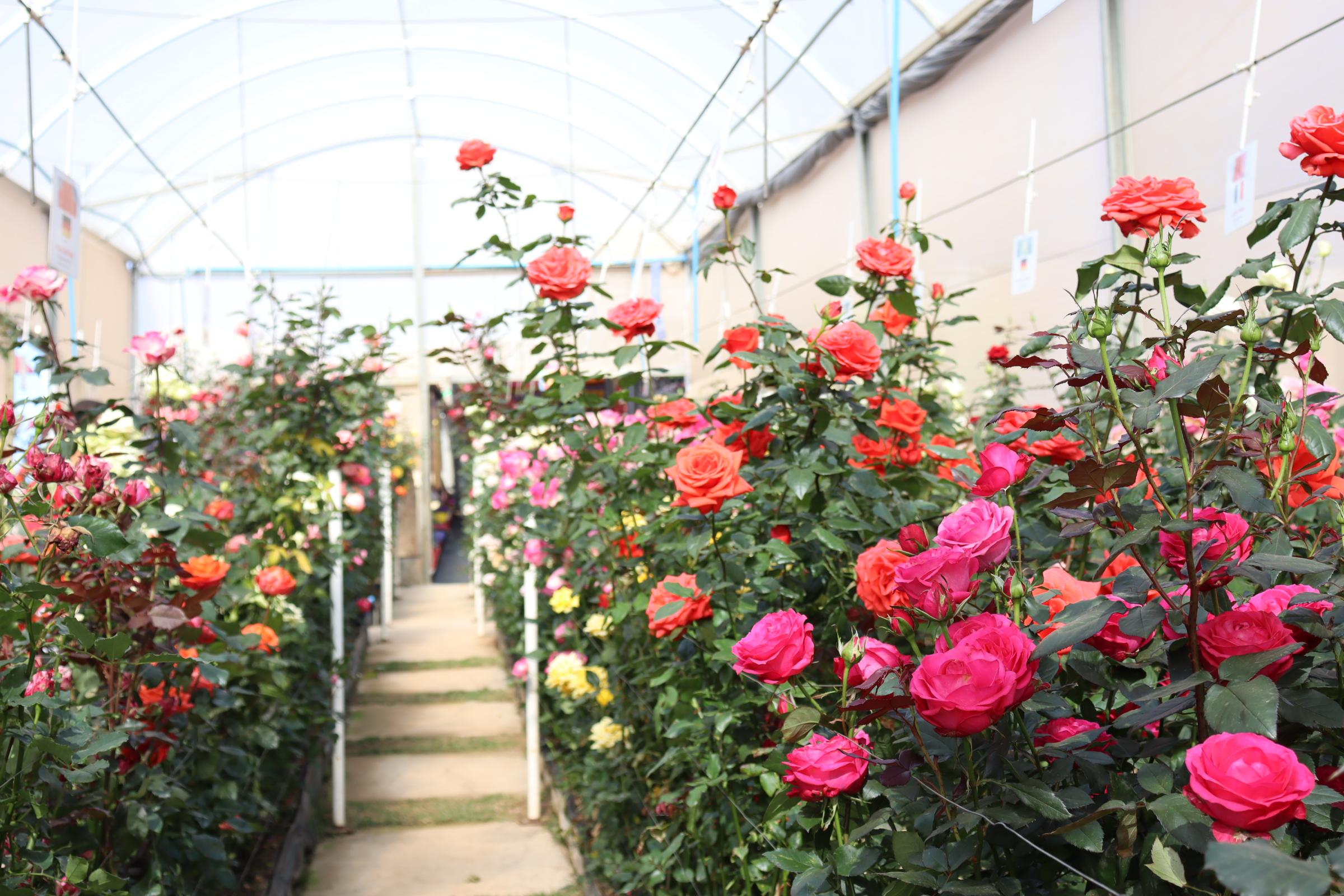 Parque temático de flores é inaugurado em Serra Negra