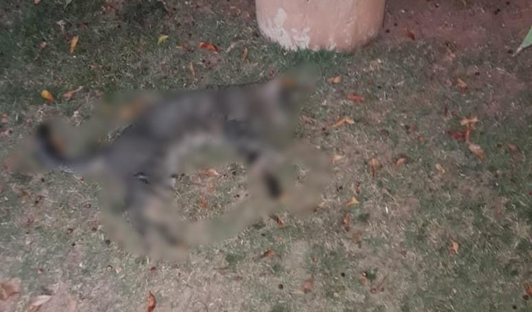 Pelo menos seis gatos foram mortos por envenenamento, no bairro das Posses, em Serra Negra
