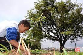 Amparo plantará duas mil mudas em comemoração do Dia da Árvore