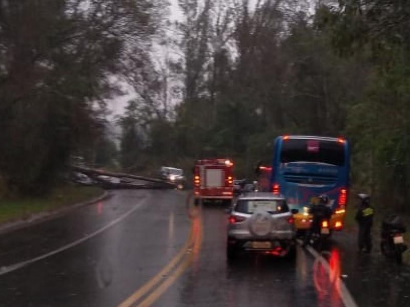 Árvore cai e bloqueia trecho da estrada Amparo/Serra Negra